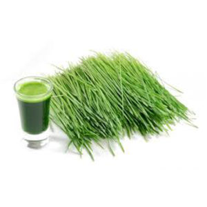 Fresh cut wheatgrass