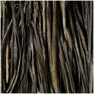 sea spaghetti leaves